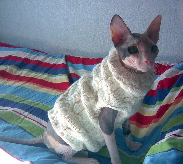 Фото одежды для кошек своими руками