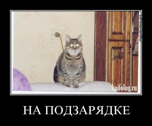 http://cs10783.vk.me/v10783029/e9d/4whBpj8P6RQ.jpg