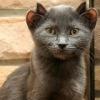 Подарите Кошке, Надежду на Дом! (+передержка)