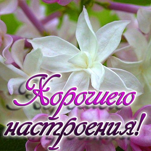 http://cs10794.userapi.com/v10794681/169/r_q4oCzLtN0.jpg