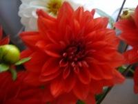 Роза Хер-Вам, 4 апреля , Донецк, id160093011