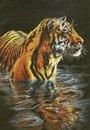 Магазин :: Вышивание :: Наборы :: Dimensions :: 35222 Купающийся тигр Tiger Chilling Out - Чудо нить.