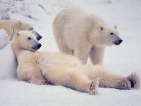 Белый Медведь, 14 мая 1992, Винница, id125923847