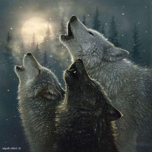 """Предпросмотр схемы вышивки  """"Ночное трио.  Ночное трио., волки, ночь, луна, зима, картина, арт, живопись, искусство..."""