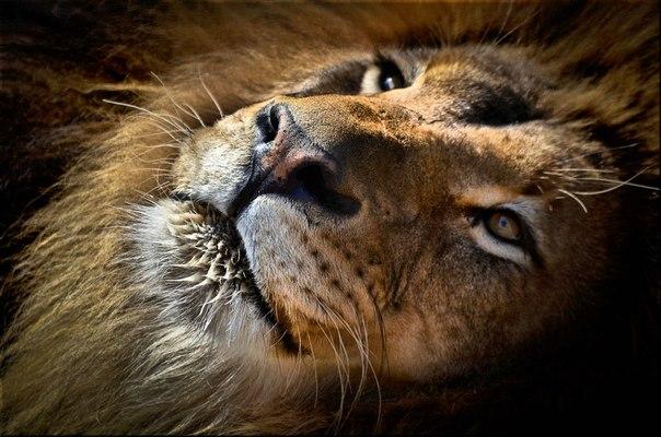 Автор фото: Michel Dumas. Спокойной ночи!