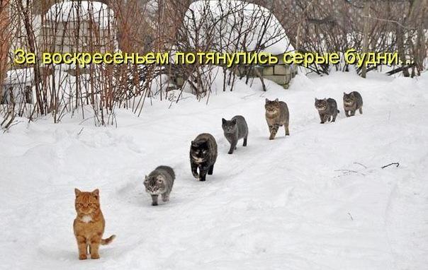 http://cs10807.vkontakte.ru/u45512105/-14/x_9263a87f.jpg