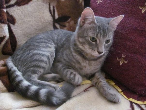 Коту 6 месяцев фото