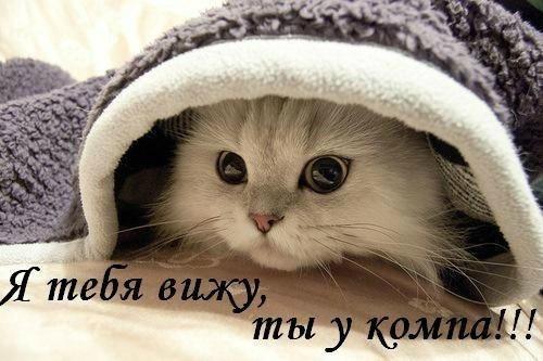 http://cs10822.vk.me/u144049986/-14/x_61885968.jpg