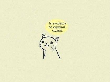 Коте прав