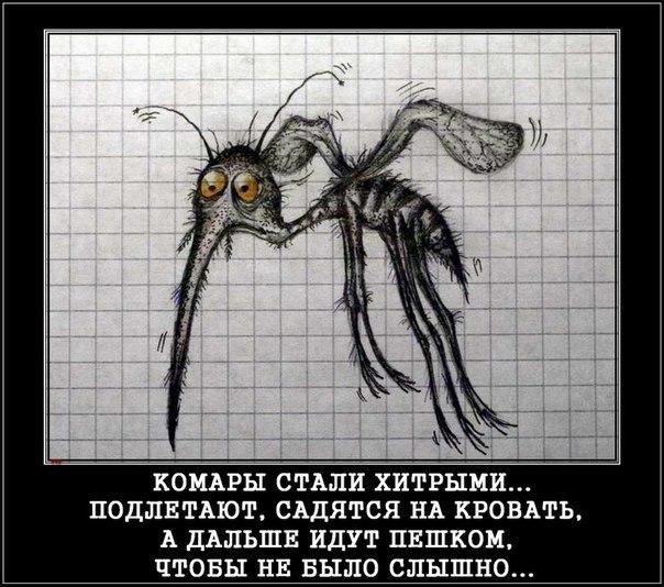 Quote. чё хоть в лесу делаешь? чего-чего, комаров кормит. марья.  Marysя.  Дата: Суббота, 09.06.2012, 21...