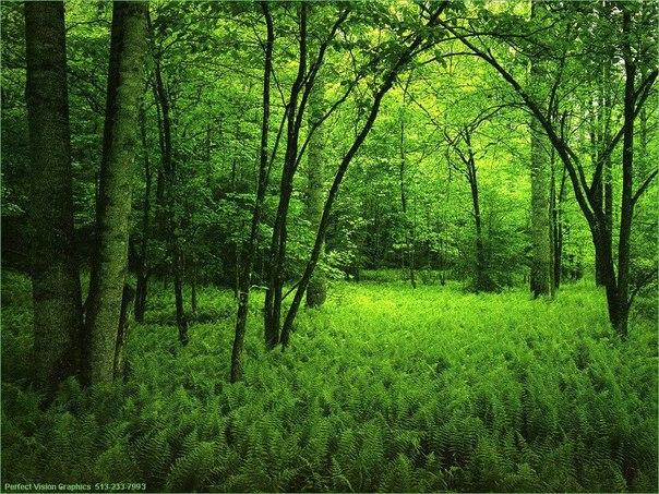 На Закарпатті висадять горіхову плантацію і 20 гектарів лісу