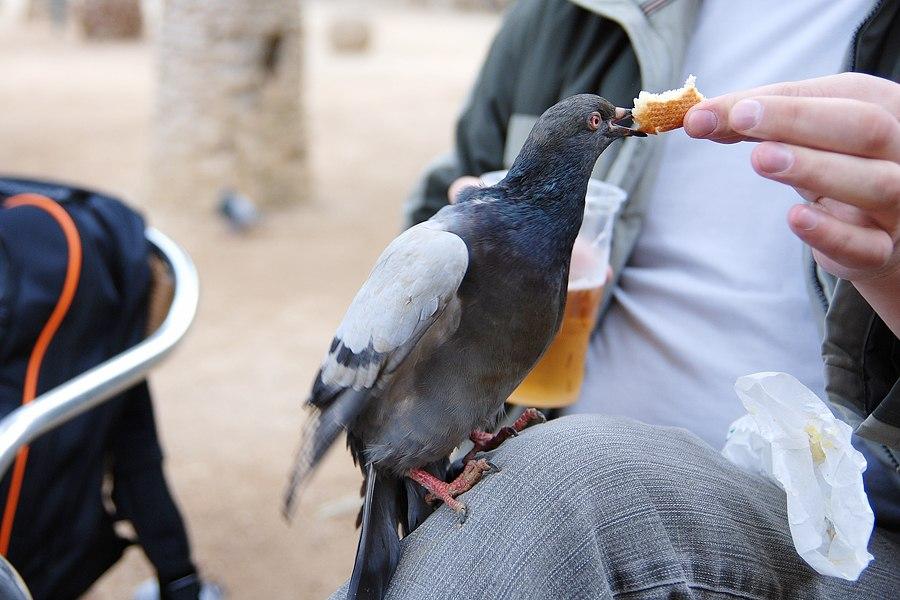 голуби с туристами общаются по-свойски