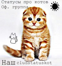 Статусы в вк про котов