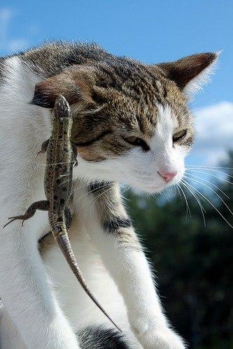 Котоматрица: чистка ушей! котам бесплатно!
