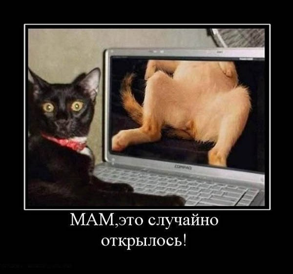 http://cs10869.vk.me/u94574569/151587479/x_69bf076a.jpg