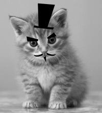 Объявление устарело.  Отдам пушистых котят, Алмалинский р-н.