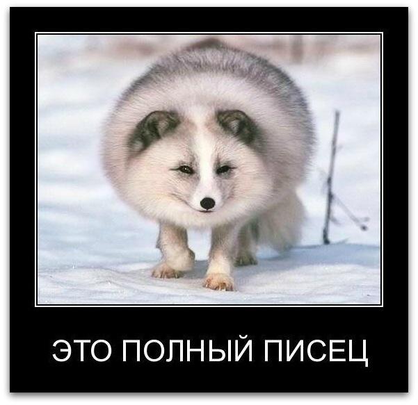 http://cs10880.vkontakte.ru/u147091410/146871806/x_8bc43bd1.jpg
