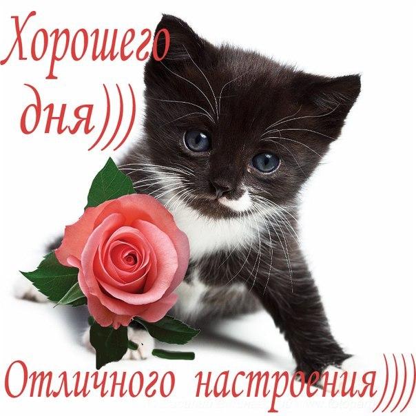 http://cs10883.vk.me/u161947567/-14/x_c1613296.jpg
