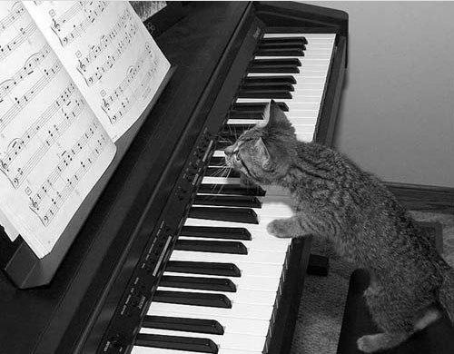 Песня кошка
