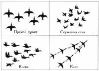 3. Зимующие птицы.  Шеренгой, фронтом или поперечным рядом летят кулики, цапли, утки.  Гуси чаще всего летят косяком.
