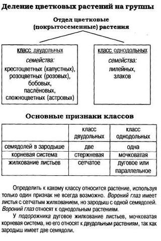 Таблицы и схемы по биологии