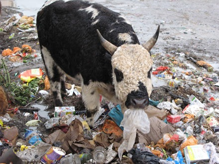 Пластиковые пакеты загрязняют природу