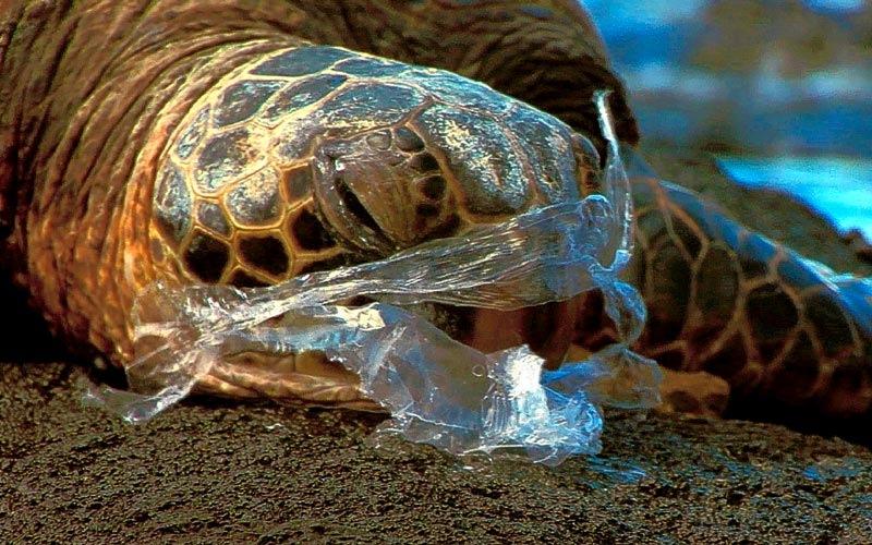 Животные умирают от пластиковых пакетов