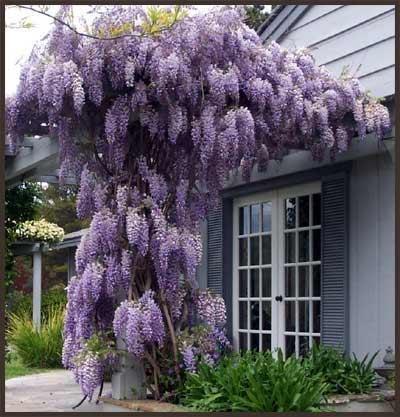 Красота вашего сада растения