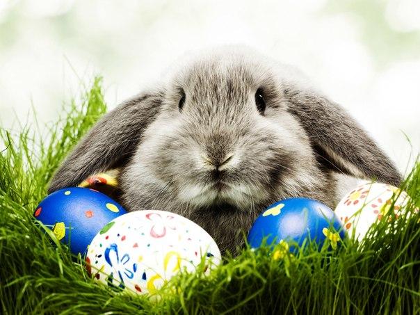 яйца, цветы, трава, животное, Цветные, пасха, кролик широкоформатные обои на рабочий стол.