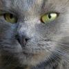 Кошки и котята ищут дом. Кошка, кот, котенок дар