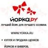 Yorka.ru - щенки йорков и биверов