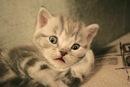 Эти самые смешные кошки - коллекция смешных кошек - Фото самых смешных...