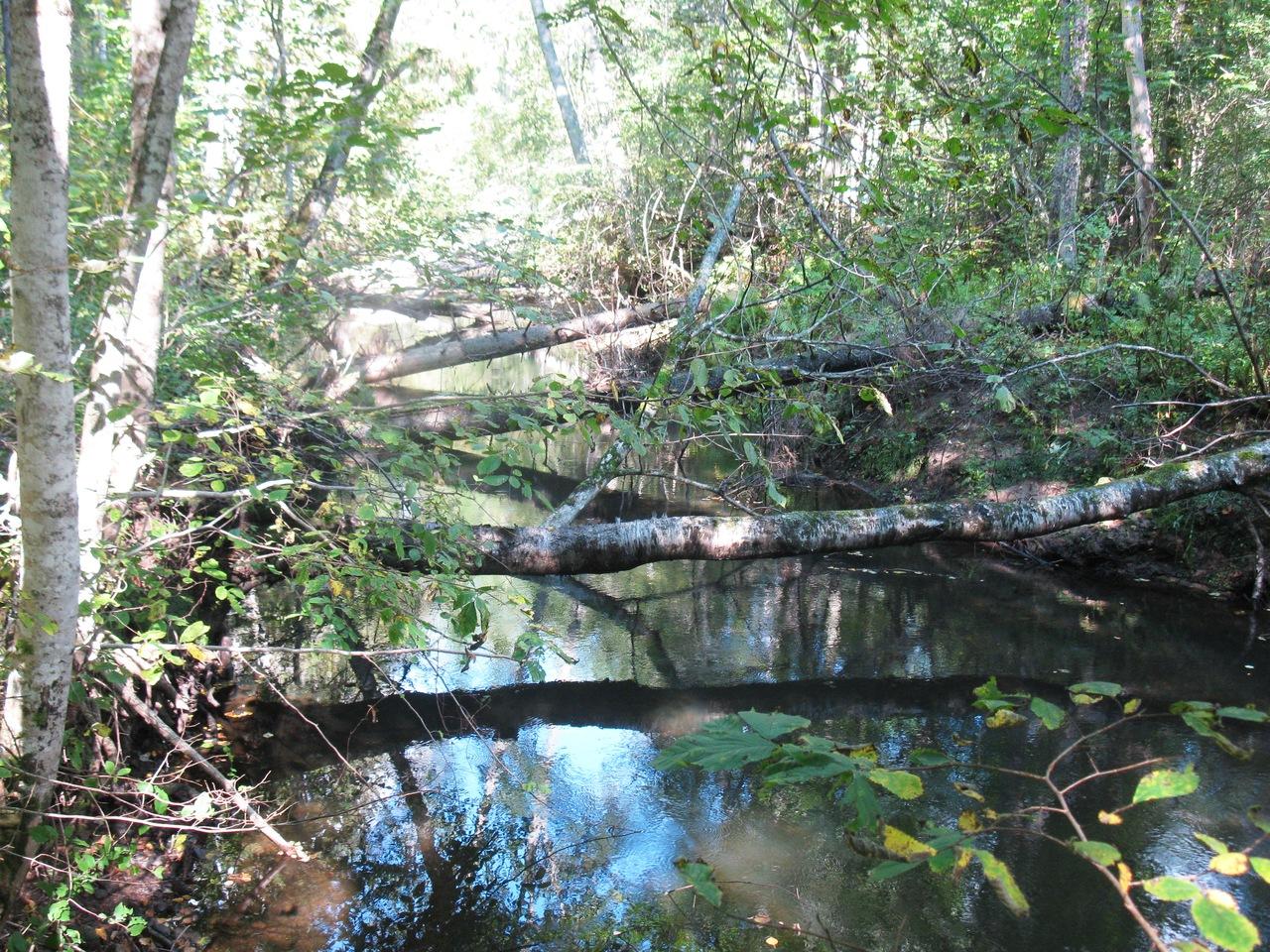 Валенный лес на реке