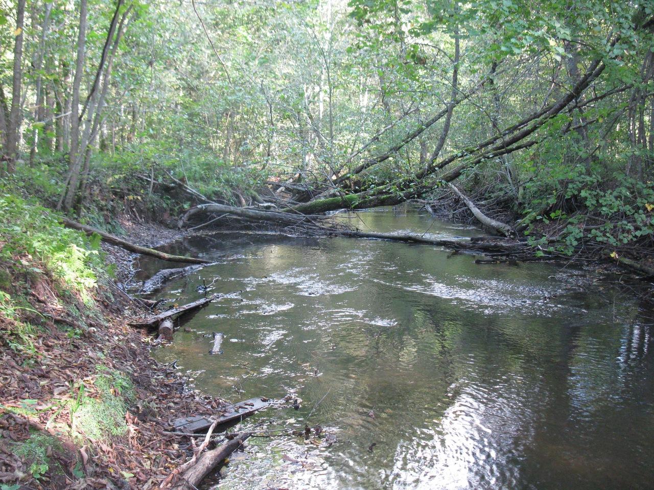 Фореллевая река недалеко от пскова