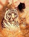 Тигры Eyes in the Wild.  Схема вышивки крестиком Вышивка крестиком от всем известной фирмы Dimensions.