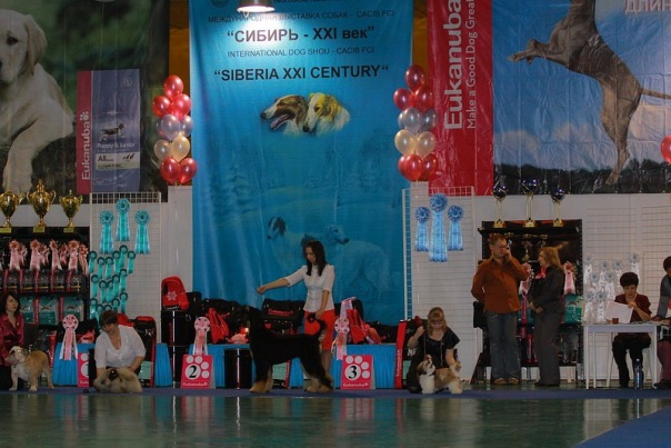 Хендлер Светлана Степанова (Новосибирск) X_130be157
