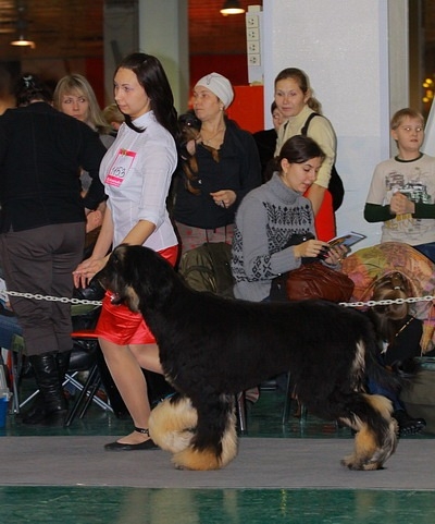 Хендлер Светлана Степанова (Новосибирск) X_34712899