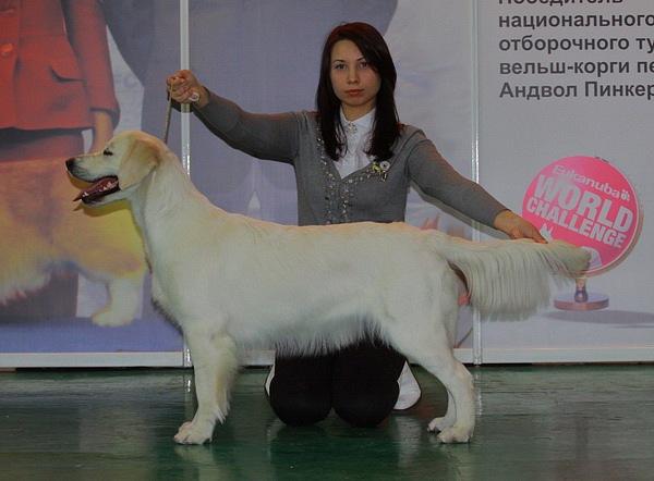 Хендлер Светлана Степанова (Новосибирск) X_8df4ae77