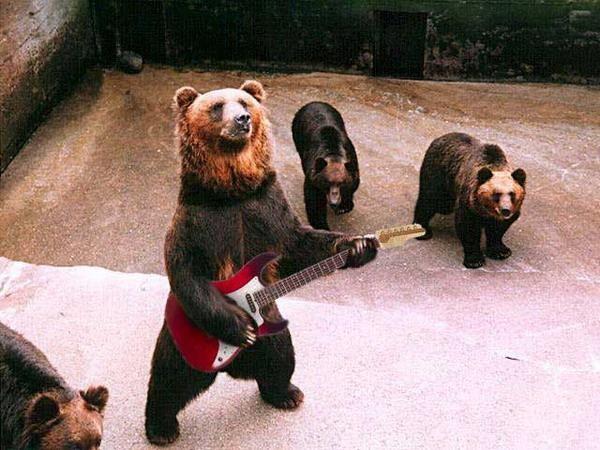 В Фото приколы. на сайте Дом Солнца.  Группа медведи!  Дежурный.