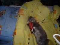 Дарья Сергеева, 12 мая 1996, Старый Оскол, id119512093