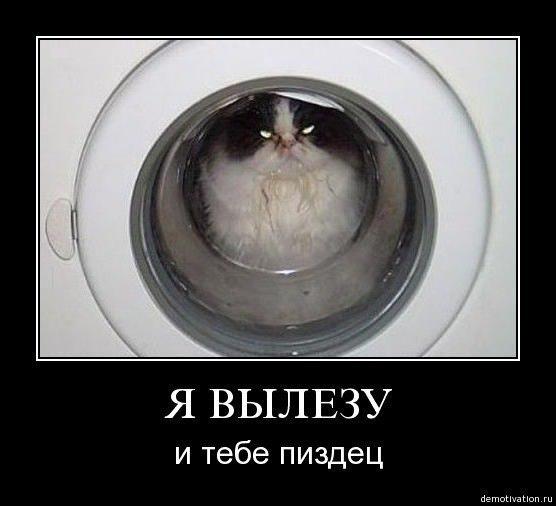 Собаки это наша жизнь кошки наша