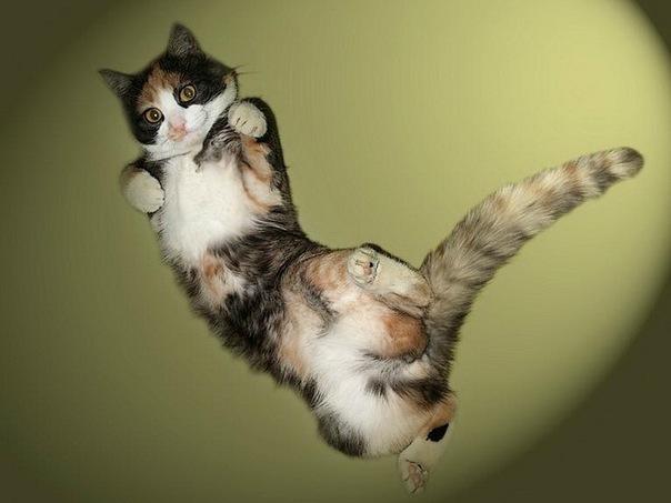 Как ухаживать за котенком? Дай Лапу - YouTube