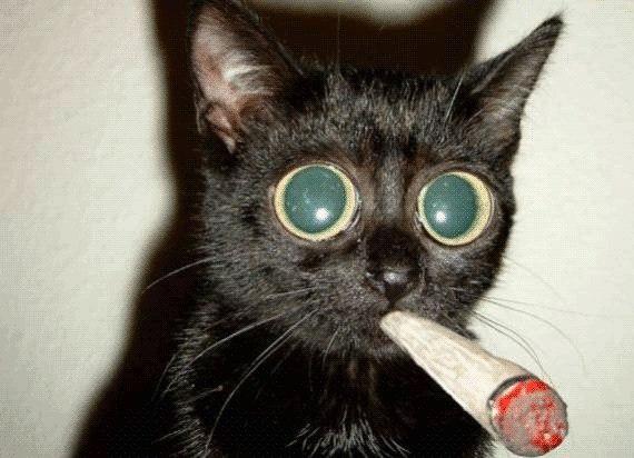 Котик курит