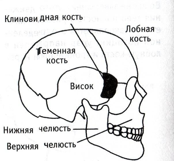 Кость Скуловая фото