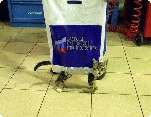 Сумка переноска для кота кошки своими руками из полиэтиленового пакета.
