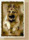 Дрессировка собак в Одессе «Компаньон»