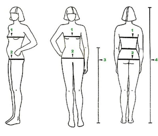 что зависит на рост груди