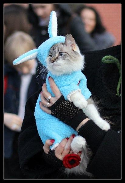 Ume одежда для котов кошек сфинксов вконтакте