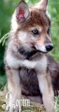 знакомства волчата today posts