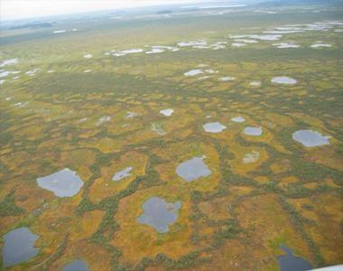 Васюганское болото - самое большое болото в мире.